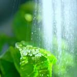 【もう枯らさない】観葉植物はお風呂場で育てるとラクチン&癒やし効果大だった!