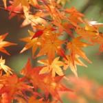 秋に入りたい!紅葉が見えるお風呂3選