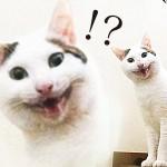 【わが家の白ねこ】おふろに入れようとしたら凄い顔に…! 猫におふろは必要?