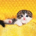 【究極の癒し♡】お風呂に入る可愛すぎる動物たち7選