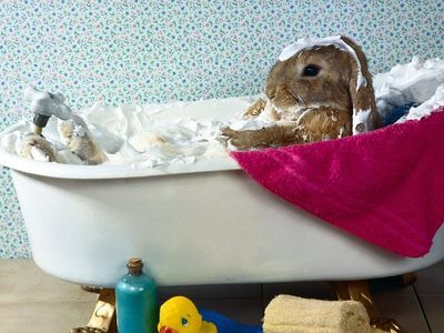 うさぎ風呂