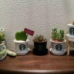 【空前の観葉植物ブーム!!】観葉植物を浴室で育てるには…?