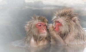 サルの混浴