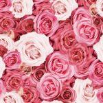 おふろで読めば気分は薔薇風呂…本当に深い!叶姉妹のファビュラスな人生の名言集【解説付き】