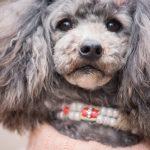 [犬好きの常識を覆す!?](犬×温泉)驚きのリゾートスパを徹底調査!