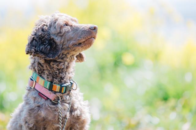 明るい顔の犬