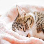 【ぐっすり寝たい!!】正しい入浴で快眠を得られるって知ってました?
