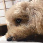 わたしんちの犬~お風呂~
